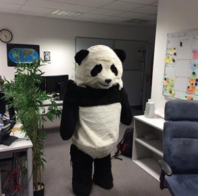 Pandabär Kostüm im Büro